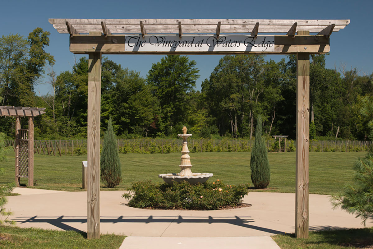 Vineyard Wedding Canton Ohio