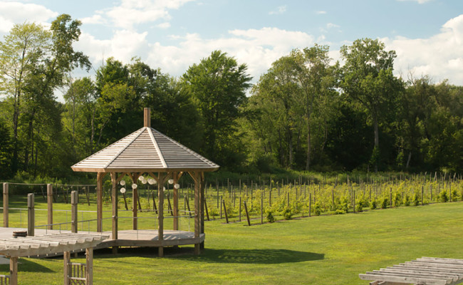 Waters-Edge-Vineyard-Weddings-Vineyard-01