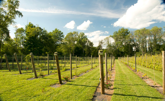 Waters-Edge-Vineyard-Weddings-Vineyard-02