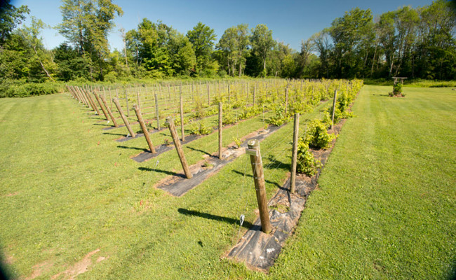 Waters-Edge-Vineyard-Weddings-Vineyard-05